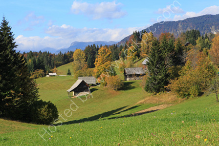 Alpine Meadows near Mt Triglav