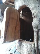 Hollow tree house detail