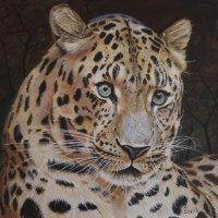Shamwari leopard  Chromacolour