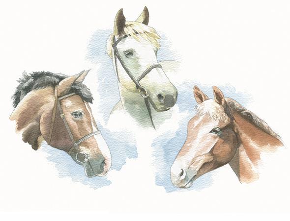 Ritva's ponies