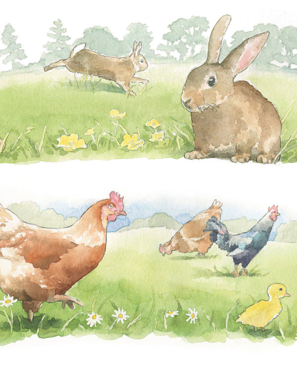 Waitrose illustrations, detail