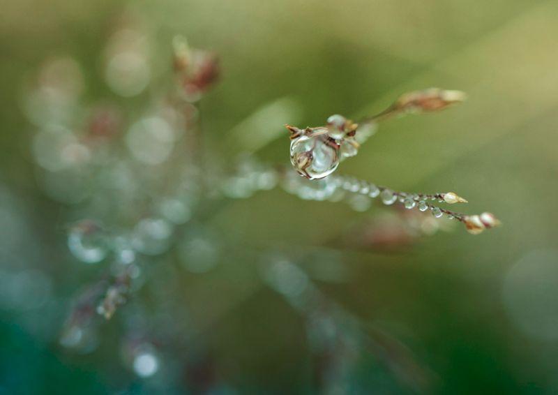 Droplet 4