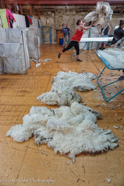 October Shearing workshop 2016-15