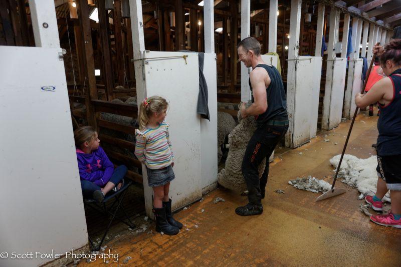 October Shearing workshop 2016-16