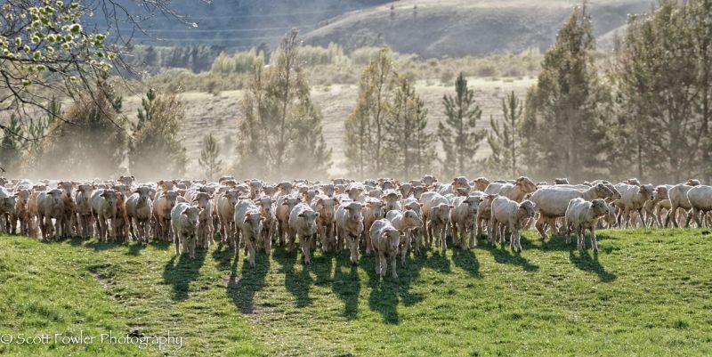 October Shearing workshop 2016-36