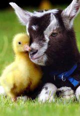 Chick n Kid