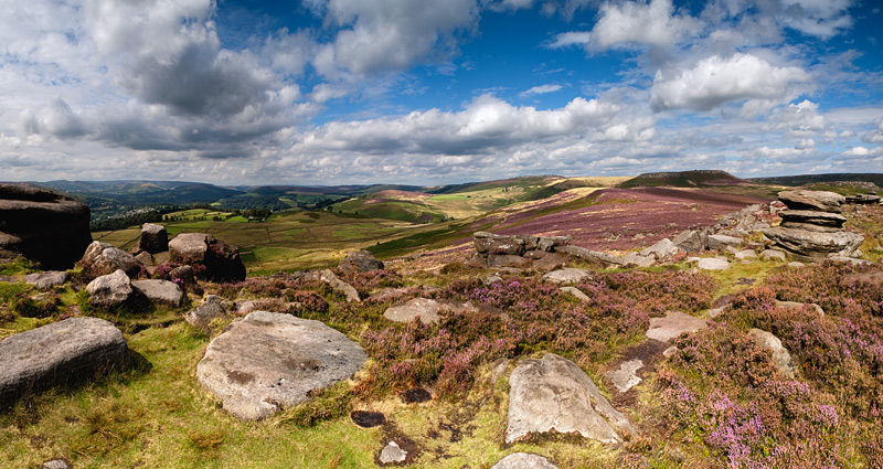 heather at Over Owler Tor
