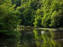 Swan at Water-Cum-Jolly dale