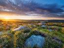 Moorland heather