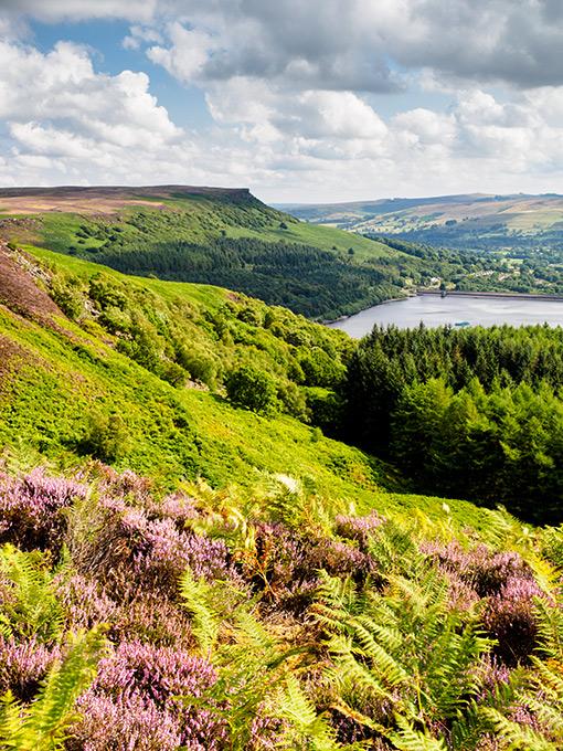 Derbyshire View