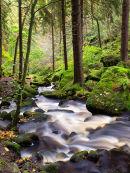 Autumn down Wyming Brook