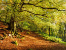 Autumn in Padley Woods