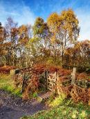 Froggatt wood in autumn