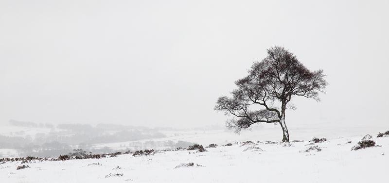 Lone tree on Lawrence Field - Derbyshire