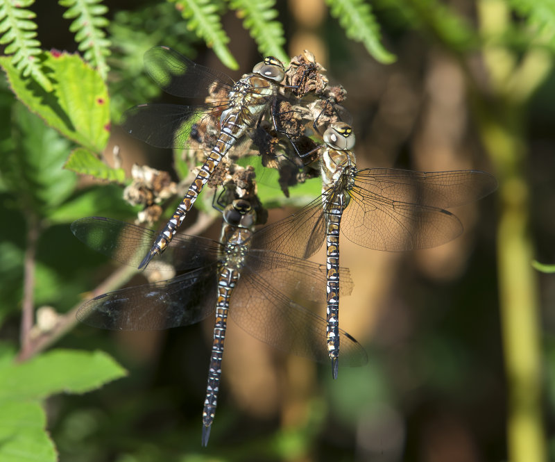 Migrant-Hawkers-females