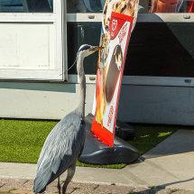 8022-Volendam heron