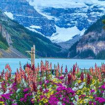 9015-Lake Louise flowers