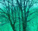 Breeze Through The Trees