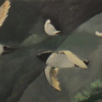 Razorbills in flight