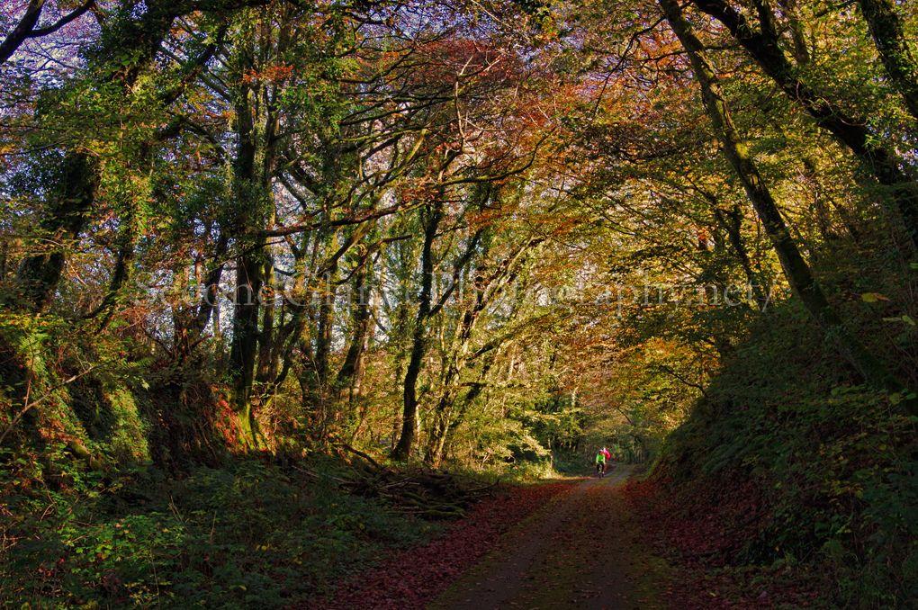 Autumn 1 (10)