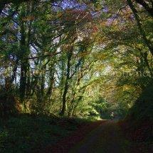 Autumn 1 (11)