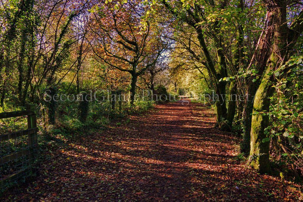 Autumn 1 (16)
