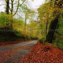 Autumn 1 (1)