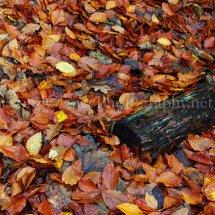 Autumn 1 (29)