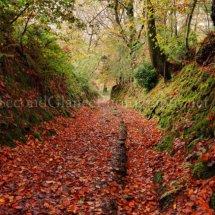 Autumn 1 (2)
