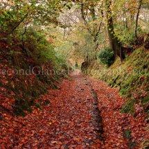 Autumn 1 (30)
