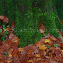 Autumn 1 (31)