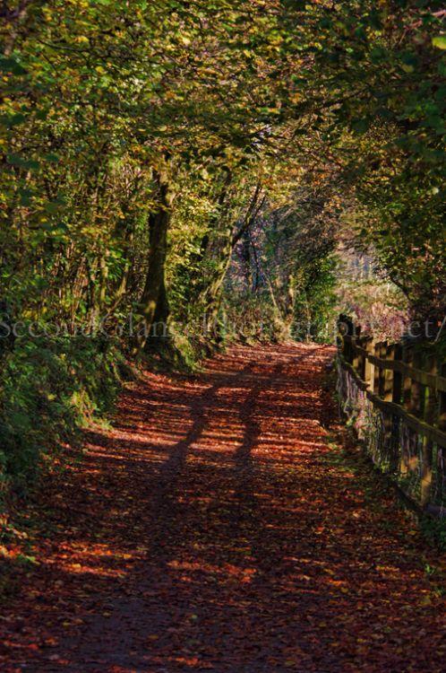 Autumn 1 (38)