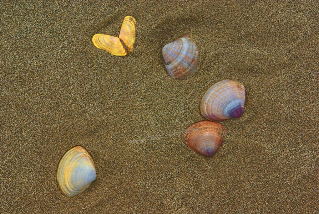 Colourful Shells