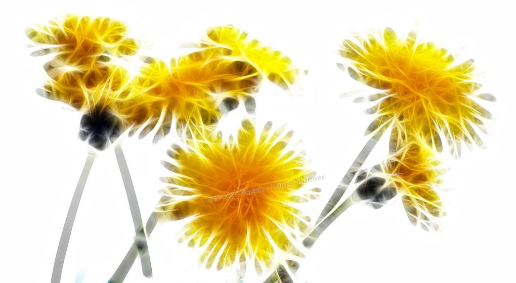 Dandelions Impressionism