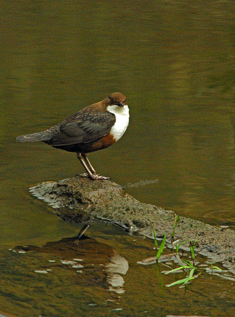 Dipper & its reflection