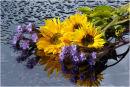Sunflowers & Lacy Phacelia