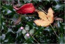 Trapped Autumn Leaves