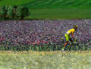 Le Maillot Jaune in Lavender