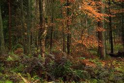 Autumn, Templeton Wood