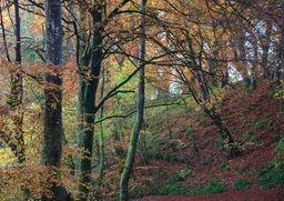 Autumn Den