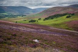 Glen Esk Landscape