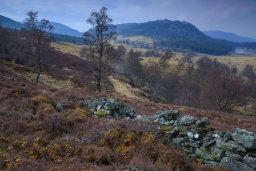 Deeside Landscape