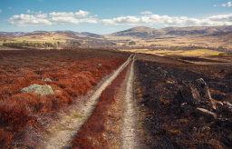 Scorched Heather and Track