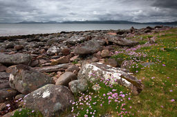 SEA PINKS, SAND BAY