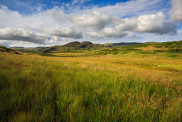 Wild Grasses in Summer