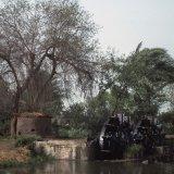 Water wheels Senuris Fayoum