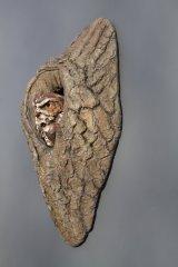 Little owl in cast tree hole