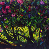 Rhodedendrons oil on canvas