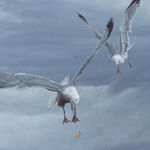 Gulls and Chips