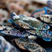 Pasar Malam Bangsar Crabs